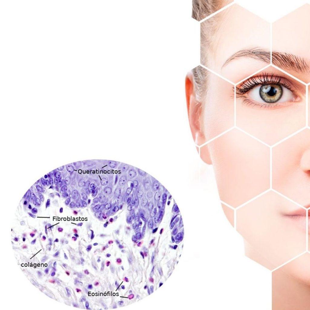 Piel y células madre